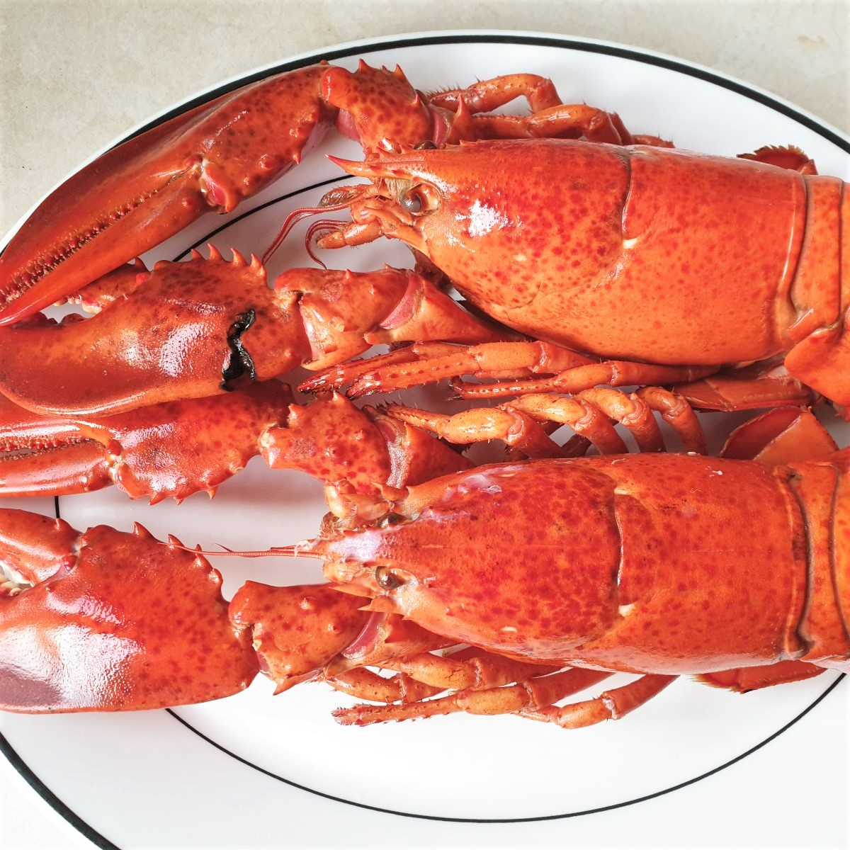 Two lobsters on a plate.